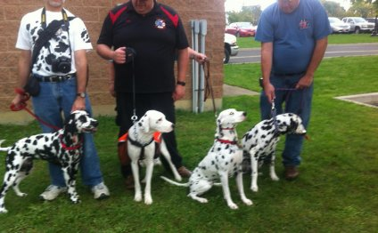Dalmatian Day 2012 - Group