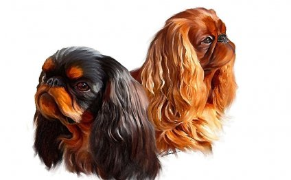 English Toy Spaniels (King
