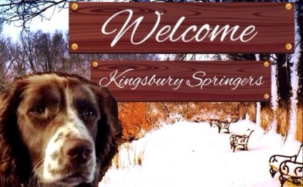 At Kingsbury Springers of