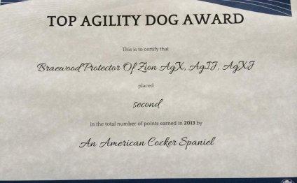 Agility Certificate