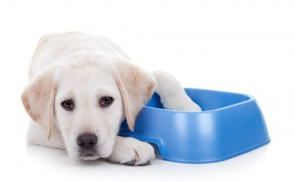 Diet for puppy health and