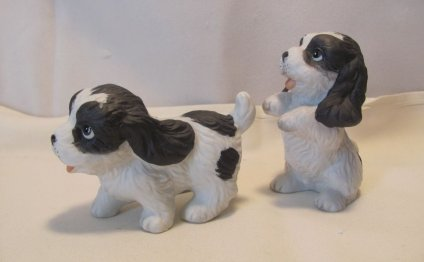 Black and white Spaniel puppies