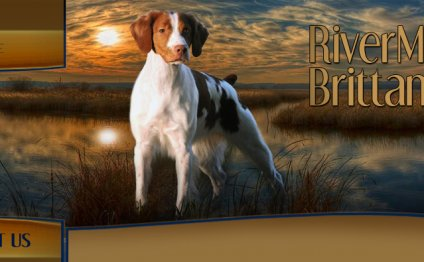 Brittany Spaniel Breeders Ontario