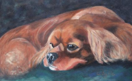 Red Cavalier King Charles Spaniel
