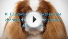 Difference Between Cavalier King Charles Spaniel and King