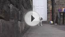 Revel the English Springer Spaniel! Training and fun! 17th