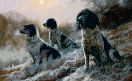 Black and white Springer Spaniels
